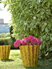 Yellow Cup Planters (Set Of 3) - By