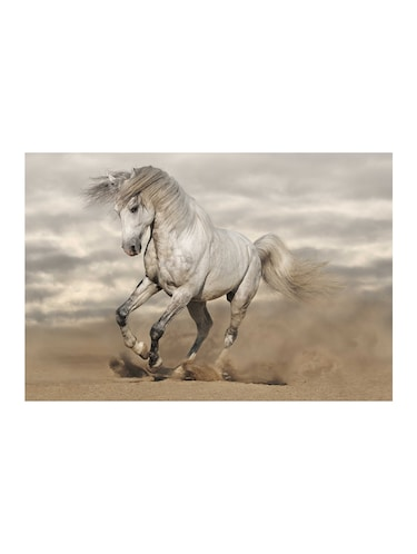 "Rawpockets""White Horse""Wall posters (PaperBoard,33cmX48cm) - 15732309 - Standard Image - 1"