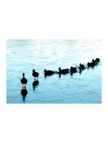 "Rawpockets""Ducks on Frozen Lake""Wall posters (PaperBoard,33cmX48cm) - 15732399 - Standard Image - 1"